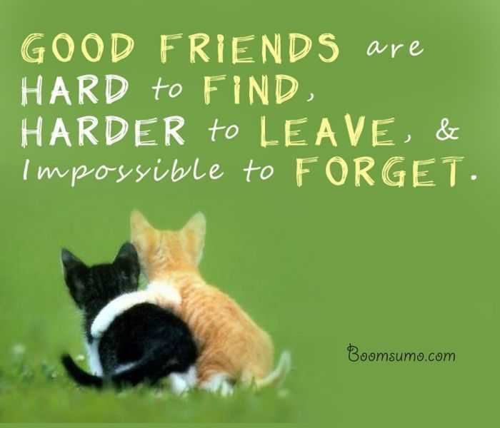45 Inspiring Friendship Quotes To Warm Your Heart Explorepic
