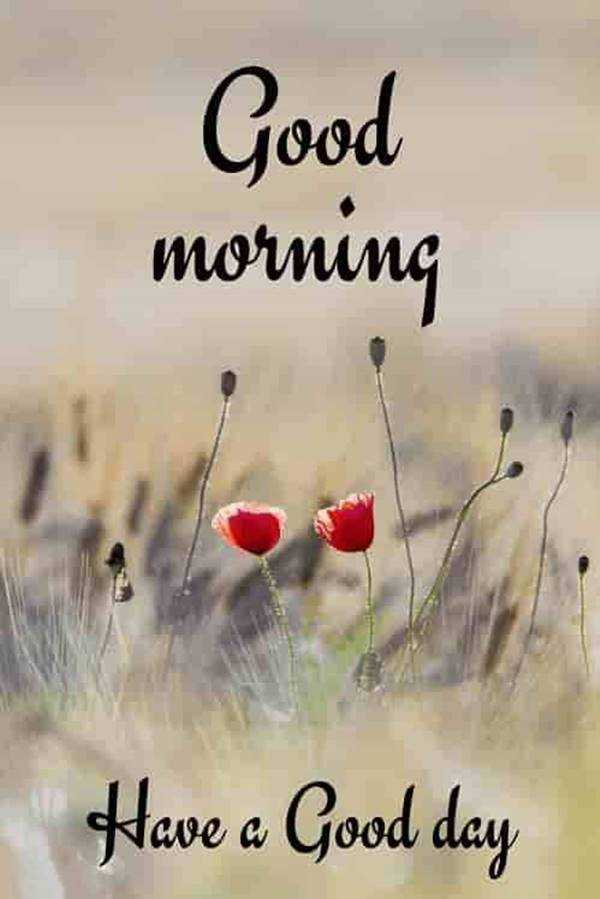 10 Best Good Morning Quotes and Wishes with Beautiful Images 4