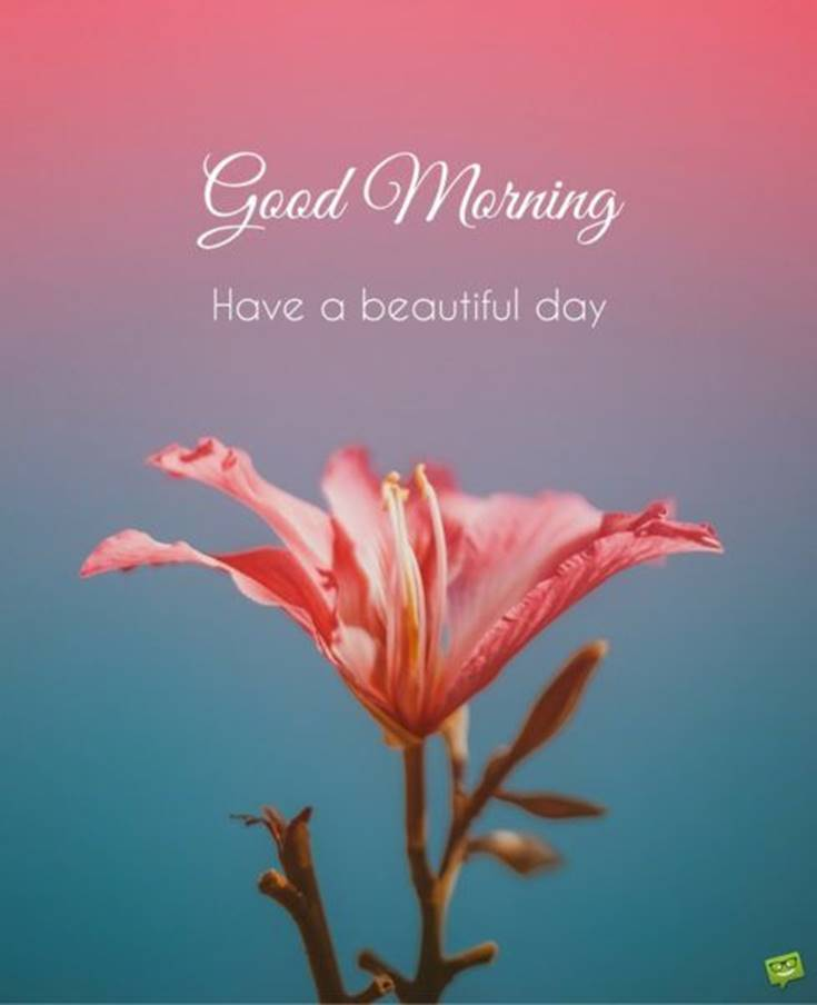 21 Good Morning Quotes and Wishes with Beautiful Images 17