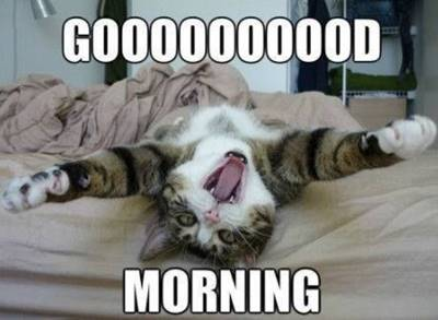 funny good morning wishes and funny memes 4