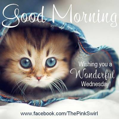 funny good morning wishes and funny memes 40