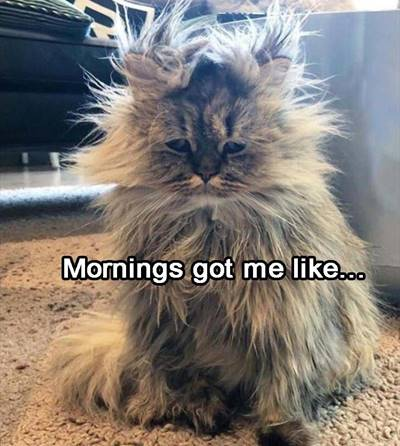 funny good morning wishes and funny memes 7