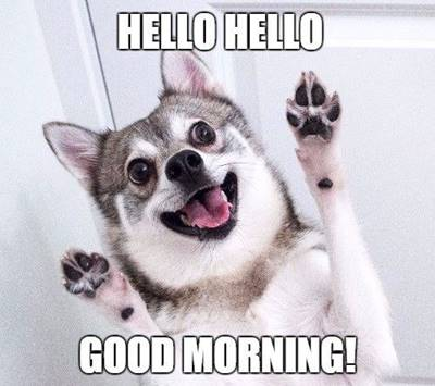 funny good morning wishes and funny memes 9
