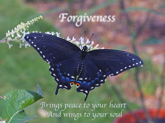 42 Forgive Yourself Quotes Self Forgiveness Quotes images love and forgiveness images forgive your husband easter forgiveness quotes