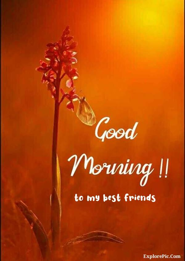 70 Good Morning Cards and Messages For Friends | good morning my friend, good morning friend, good morning best friend