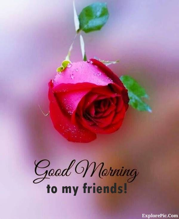 70 Good Morning Cards and Messages For Friends | good morning my sweet friend, good morning wishes for friend, morning friend