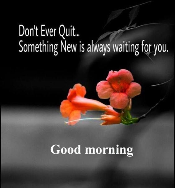 70 Good Morning Cards and Messages For Friends | good morning wishes for a friend, good morning bestie, good morning bff quotes