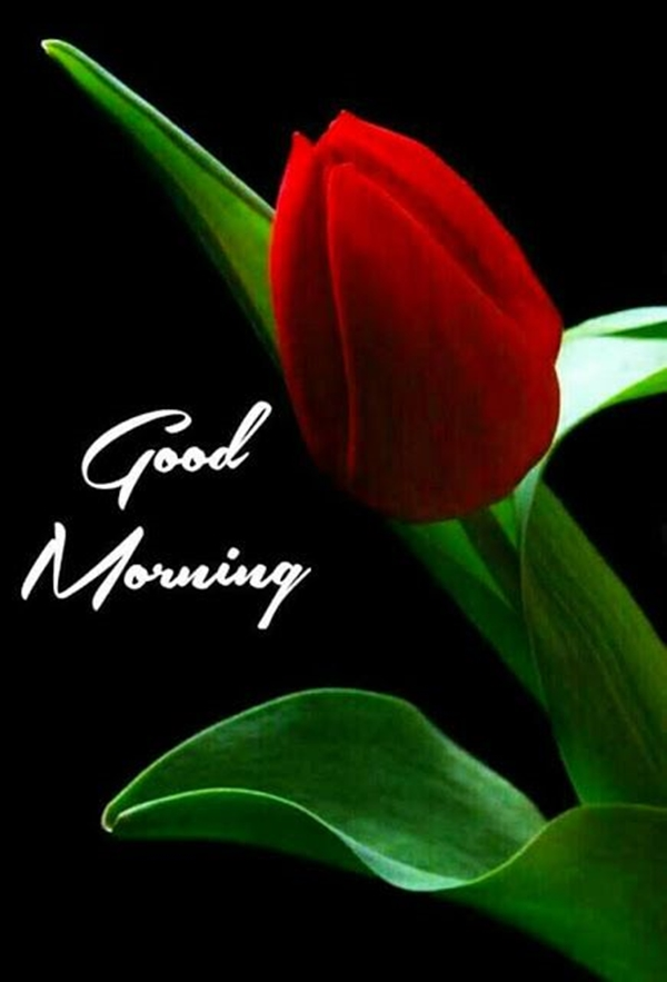 70 Good Morning Cards and Messages For Friends | good morning letter to a special friend, heartfelt good morning messages for her, good morning sms for my best friend