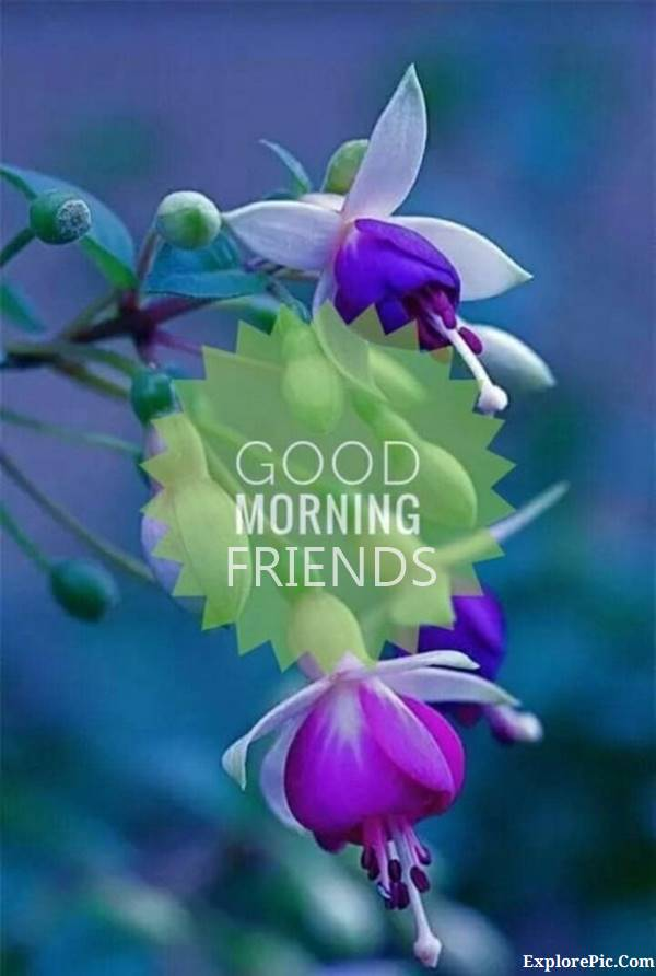 70 Good Morning Cards and Messages For Friends | good morning special friend, good morning friend quotes, good morning beautiful friends