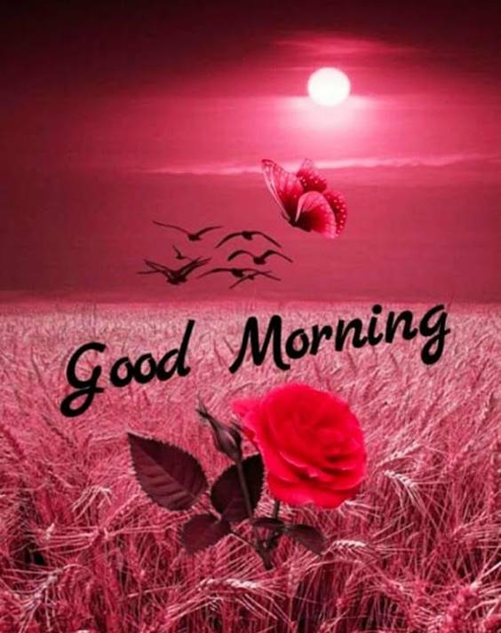 300 heart touching good morning messages – best good morning wishes 20