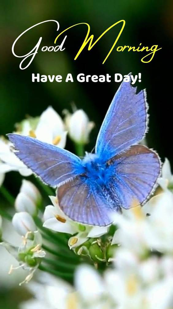 300 heart touching good morning messages – best good morning wishes 45