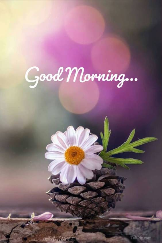 300 heart touching good morning messages – best good morning wishes 49