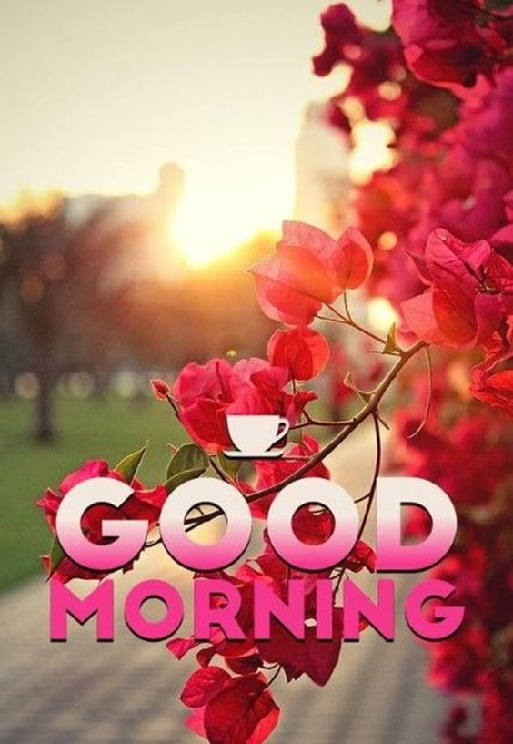 300 heart touching good morning messages – best good morning wishes 51