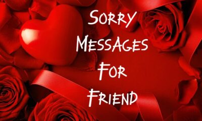 What to Write I Am Sorry Messages for Friends Apology Quotes and Notes