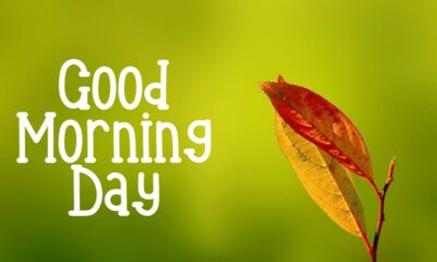 Good Morning Day Images With Messages And Positive Good Morning Quotes
