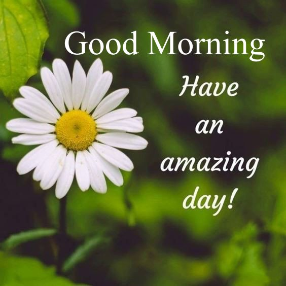 beautiful good mornings Special Good Morning Images With Quotes And Cute Good Morning Quotes