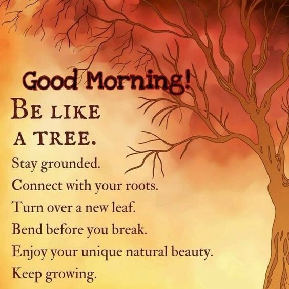 morning pics Special Good Morning Images With Quotes And Cute Good Morning Quotes